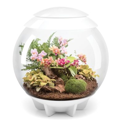 biOrb Air 60 LED Terrarium - White